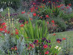 Garden Design By Carolyn Mullet leonotis leonurus | staircases, plants and meadow garden