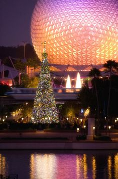 Evening Holiday Happenings at Walt Disney World Resort---worth keeping the kids up past bed time!