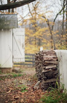Autumn country scene with old shed, trees with Autumn leaves and chopped firewood all stacked up for those cool autumn nights!