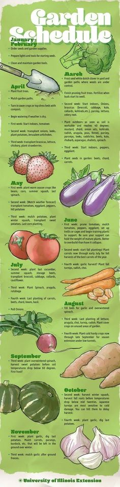 January-February  Order seeds and garden supplies. Prepare lights and tools for starting seeds. Clean and maintain garden tools.   March ...