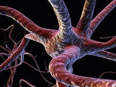The human brain may contain up to one trillion neurons. These nerve cells are interconnected, as shown in this microscopic image, so that they can transmit electrical impulses—and information—to other cells.