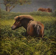 Ponies on Exmoor