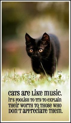 Cats are like music. it's foolish to try to explain their worth to those who don't appreciate them.