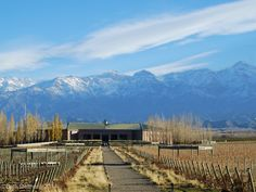 Mendoza Winery Tours-Spend Your Sunday Exploring the Wineries on Route 89 in Valley Uco