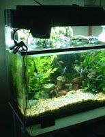 Oświetlenie akwarium dzień noc ryby rośliny