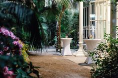 Sidewalk, Plants, Personal Counseling, House, Walkway, Flora, Plant, Walkways, Planting