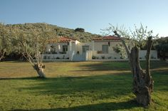 View of the building(Gera's Olive Grove ESTATE) Olive Tree, Lodges, Acre, Natural Beauty, Greece, Island, Traditional, Landscape, Building