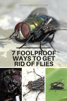 """7 Foolproof Ways To Get Rid Of Flies - Today I'm showing you 6 ways + one added surprise on how to get rid of flies naturally and most with ingredients you already have in the home. One bonus, to using the items described below is that you can start to become creative with decorating with helpful """"around the house"""" deterrents."""