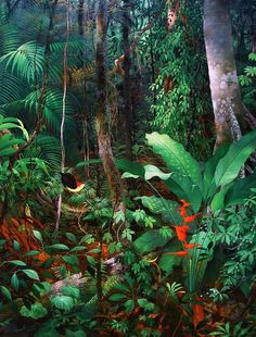Beautiful rainforest ~ Anderson Debernardi Source by Tropical Art, Tropical Garden, Tropical Plants, Jungle Art, Forest Painting, Tropical Landscaping, Naive Art, Visionary Art, Psychedelic Art