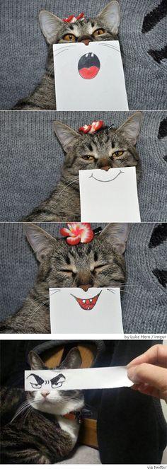 고양이 웃게 하는 법... 인기 : 네이버 뉴스 월드카지노 THQ725。COM