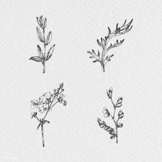 Hand drawn plants collection vector   premium image by rawpixel.com / Te Penguin Illustration, Plant Illustration, Flower Illustrations, Branch Vector, Christmas Plants, Plant Aesthetic, Plant Vector, Free Hand Drawing, Hand Drawn Flowers