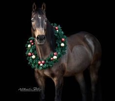 Christmas Horses, Christmas Animals, Xmas Photos, Equine Photography, Horse Love, Wild Horses, Horse Stuff, Show Horses, Zebras