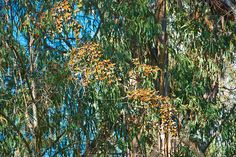 090125_Butterfly_Sanctuary-12 by joseph.hallaux, via Flickr #goleta