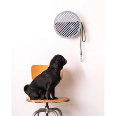 All Doris wants to do is go for a walk! All her items are kept in the stylish and Functional wall basket design. Baskets On Wall, Wall Basket, Stuffed Animal Storage, Lobby Design, Decorative Storage, Architectural Digest, Scandinavian Interior, Elle Decor, Entryway Decor