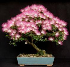 FLORES E PLANTAS: Dicas de cuidados e cultivo para plantas em miniat...