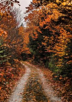 Autumn Aesthetic, Autumn Cozy, Autumn Forest, Fall Wallpaper, All Nature, Autumn Photography, Photography Flowers, Fall Pictures, Autumn Inspiration
