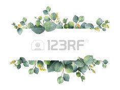eukalyptus: Aquarell grün floral Banner mit Silber-Dollar-Eukalyptus-Blättern und Zweigen isoliert auf weißen Hintergrund. Lizenzfreie Bilder