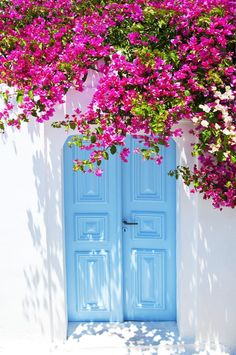 Find Old Blue Door Pink Flowers Traditional stock images in HD and millions of other royalty-free stock photos, illustrations and vectors in the Shutterstock collection. Flower Background Wallpaper, Flower Backgrounds, Nature Wallpaper, Wallpaper Backgrounds, Things To Do In Santorini, Beautiful Flowers Wallpapers, Sgraffito, Bougainvillea, Color Of The Year