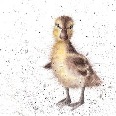 CS019 - 'Just Hatched' | Wrendale Designs