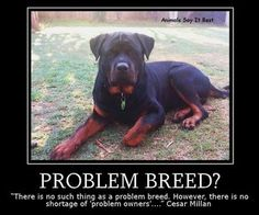 Problem Breed photo -ProblemBreed.jpg Dog Fighting, Big Dogs, I Love Dogs, Cute Dogs, Dogs And Puppies, Doggies, Rottweiler Quotes, Rottweiler Breed, Rottweiler Training