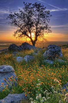 Wildflowers and a setting sun, Hwy 223 near Arvin, California by Navdeep Singh