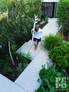 Australian coastal garden in the eastern suburbs of Sydney, Australia.