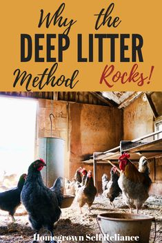 """Deep Litter Method for Chickens - What it is and why it's awesome. The deep litter method is a great """"lazy"""" way of keeping your coop clean and fresh. Raising Meat Chickens, Best Egg Laying Chickens, Raising Backyard Chickens, Backyard Poultry, Keeping Chickens, Pet Chickens, Best Chicken Coop, Building A Chicken Coop, Chicken Feed"""