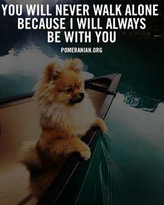 Siberian Husky Puppies, Husky Puppy, Siberian Huskies, Corgi Puppies, Pomeranian Memes, Cute Pomeranian, Cute Dog Memes, Cute Dogs, Funny Memes
