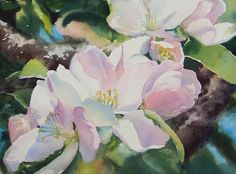 """Apple Blossoms by Poppy Balser Watercolor ~ 10 """" x 14 """""""