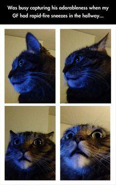 http://thehumortrain.tumblr.com/ #cats