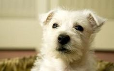 What Homemade Deodorizer Can You Spray on Your Dog? | Dog Care - The Daily Puppy