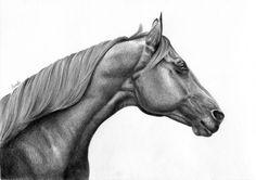 Zasłuchany koń. - Rysunek zasłuchanego konia, klasyczne ujęcie zwierzęcia z profilu. Na tym przedstawieniu, najbardziej podoba mi się jednak grzywa... Widać, że jest miękka Najlepsze rysunki koni w sieci - Magdalena Muraszko-Kowalska - rysunki