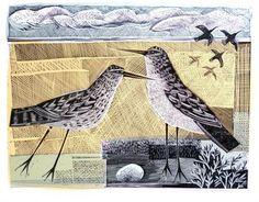 Norfolk Birds - click to enlarge