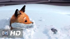 "CGI **Award Winning** 3D Animated Short: ""A Fox And A Mouse"" - by ESMA Character DEvelopment"