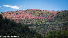 Uintah Mountains, Utah