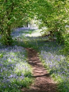 Woodland Path through Yoxall Lodge Bluebell Woods, Staffordshire, England . Photo by Graham Taylor . Woodland Path through Yoxall Lodge Bluebell Woods, Staffordshire, England . Photo by Graham Taylor . Landscape Photography, Nature Photography, Landscape Art, Landscape Paintings, Woodland Garden, Nature Tree, House Nature, English Countryside, Nature Wallpaper