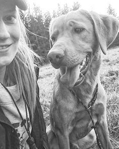 After training with Vincent    På kommande prov ska jag se allt som träning för både mig och Vincent. Man få alltid ha i baktanke att inte jämföra sig med andra. Ta allt i sin egna takt och att man gör detta för att det är roligt. GLÖM INTE BORT DET AMANDA!! Nervös som sjutton dock  #capercailiesgundog #labrador #labradorretriever #gundogs #retriever #gundog by nordic_huntress