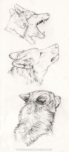 Need some drawing inspiration? Well you've come to the right place! Here's a list of 40 free and easy animal sketch drawing ideas and inspiration. Why not check out this Art Drawing Set Artist Sketch Kit, perfect for practising your art skills. Drawing Sketches, Cool Drawings, Drawing Ideas, Sketch Ideas, Drawings Of Wolves, Drawing Tips, Anime Drawing Tutorials, Tumblr Art Drawings, Tumblr Sketches