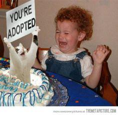 De un gato que sale de la torta de un niño con un cartel que dice que es adoptado