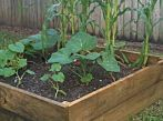 An easy raised garden bed for beginners