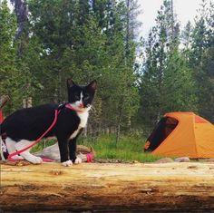 quandary q lotus lady goes camping