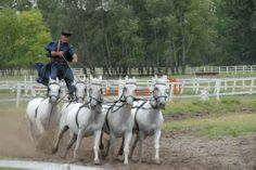 Bugac Puzsta - Horse show Show Horses, Hungary, Travel, Animals, Viajes, Animales, Animaux, Destinations, Animal