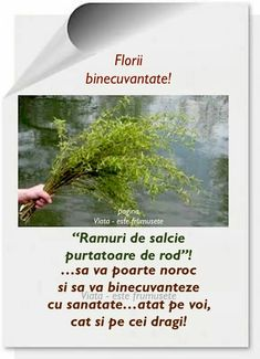 Spring Time, Herbs, Plants, Romania News, Pictures, Herb, Plant, Planets, Medicinal Plants