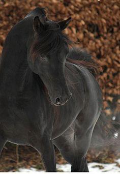 Curiosidades sobre Cavalos                                                                                                                                                      Mais