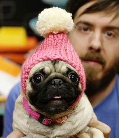 winter hat for the pug!