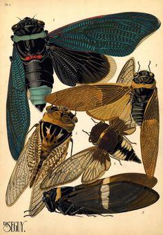 Canada Goose expedition parka online store - 1000+ images about Art of Nature on Pinterest | John James Audubon ...
