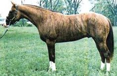 Color Experts My horse has broken laws of genetics (explosions of pictures) Who has heard of a brindle horse! Rare Horses, Horses And Dogs, Wild Horses, Most Beautiful Animals, Beautiful Horses, Brindle Horse, Horse Markings, American Quarter Horse, Quarter Horses
