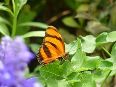Winnipeg Zoo - Butterfly Conservatory Conservatory, Butterfly, Photos, Animals, Pictures, Animais, Animales, Animaux, Conservatory Garden