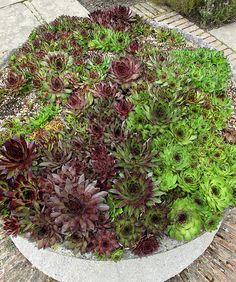 Planter of Succulents