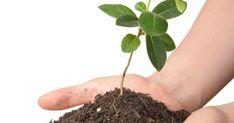 Nej, inte vattnet! Och stjäl dem inte, det straffar sig. Här är ett knippe goda råd som hjälper dig lyckas med att göra fler plantor av dina gamla krukväxter. Gardening, Inspiration, Ska, Biblical Inspiration, Garten, Lawn And Garden, Garden, Inspirational, Square Foot Gardening